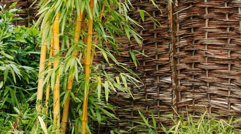 Bambou dans le jardin
